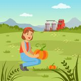 Farmer woman harvesting pumpkins in the field, agriculture and farming. Farmer woman harvesting pumpkins in the field, agriculture and farming, rural landscape Royalty Free Stock Photo