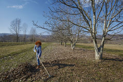 Farmer woman spring cleaning with a rake Stock Photography