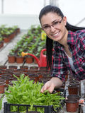 Farmer woman with sprouts in greenhouse Stock Photography