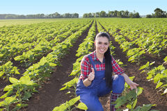Farmer woman in sunflower field. Satisfied young farmer girl squatting in sunflower field and showing ok sign in early summertime Stock Photos
