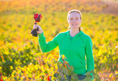 Farmer woman in vineyard harvest autumn in mediterranean Royalty Free Stock Photos