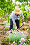 Farmer woman working backyard flowers Royalty Free Stock Images