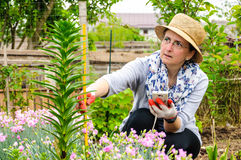 Farmer woman working garden measure flower Stock Photos