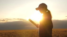 Farmer woman working with a tablet in a wheat field, in sunset light. business woman in field of planning her income. Woman agronomist with tablet studies stock video footage