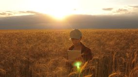 Farmer woman working with a tablet in a wheat field, in sunset light. business woman plans profit in a wheat field. Farmer woman working with a tablet in a wheat stock video