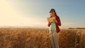 Farmer woman works with a tablet in a wheat field, plans a grain crop. business woman in field of planning her income. Farmer woman works with a tablet in a stock video footage