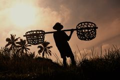 Farmer with wooden tool to prepare paddy field Stock Photo