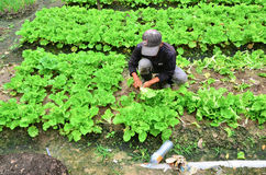 Farmer at work Royalty Free Stock Images