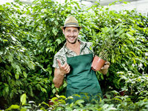 Farmer at work. In a greenhouse Stock Photos