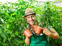 Farmer at work in a greenhouse. Happy farmer at work in a greenhouse Royalty Free Stock Photography