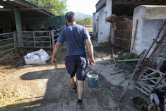 Farmer at work on his farm. A farmer carry a bucket with grain to feed his cattle in a farm near the village of Bunyola, in the Spanish mediterranean island of royalty free stock image