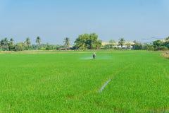 Farmer work in rice plantation for spray fertilizer stock photos