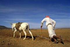 Farmer at work in Yemen Stock Photography