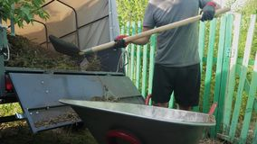 Farmer worker load grass and trash into a trailer truck from a wheelbarrow lifestyle with pitchforks and hands. man stock video
