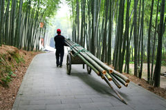 Farmer working in bamboo forest Stock Photos
