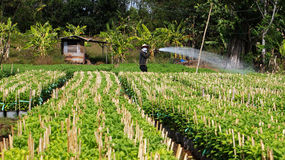 Farmer working crop plants at farm village. LAM DO Royalty Free Stock Image