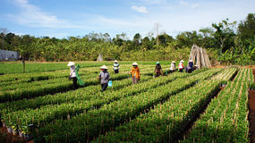 Farmer working crop plants at farm village. LAM DO Royalty Free Stock Images