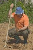 Farmer working on the farm Royalty Free Stock Photo