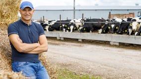 Farmer working on farm with dairy cows. Farmer is working on farm with dairy cows royalty free stock photo