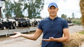 Farmer working on farm with dairy cows. Farmer is working on farm with dairy cows stock photo