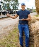 Farmer working on farm with dairy cows. Farmer is working on farm with dairy cows stock image