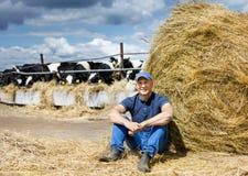 Farmer working on farm with dairy cows. Farmer is working on cow farm stock photos