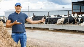 Farmer working on farm with dairy cows stock photography