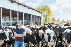 Farmer is working on farm with dairy cows Stock Image