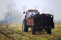 Farmer working royalty free stock image