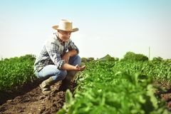 Farmer working in field. Daily Royalty Free Stock Photos