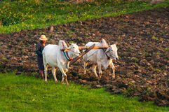 Farmer working in the field Royalty Free Stock Photos