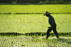 Farmer working in the fram Royalty Free Stock Photography