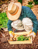 Farmer working in the garden Royalty Free Stock Image