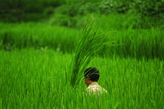 Farmer working. Gurkha, Nepal Stock Image
