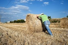 Farmer working at his farmland Royalty Free Stock Photos