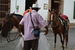 Farmer working with his horses in Santafe de Antioquia, Colombia Stock Image
