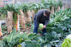 Farmer working in his orchard Royalty Free Stock Photo