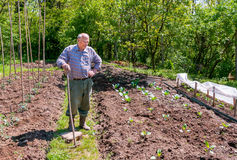 Free Farmer Working In The Garden Royalty Free Stock Image - 58330026