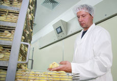 Farmer working in incubator. Farmer controls baby chicken, hatched from the incubator Stock Images