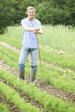 Farmer Working In Organic Farm Field Raking Carrots Stock Images
