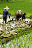 The farmer working in the paddyfield . Stock Photography