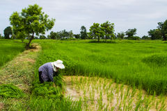 Farmer working Stock Photography