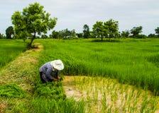 Farmer working Stock Photos