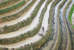 Farmer working on Rice terraces at Longsheng, China Royalty Free Stock Photos
