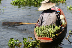 Farmer working sailing on small boat for selling organic fresh banana at river of floating market Royalty Free Stock Photo