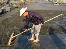 Farmer is working in Saltern Stock Image