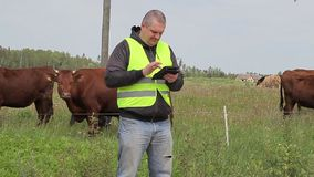 Farmer working with tablet PC near cows at pasture stock footage
