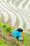 Farmer. A farmer working in terraced fields Stock Image