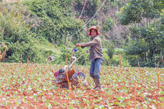 Farmer working in vegetable farm Royalty Free Stock Photo