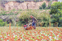 Farmer working in vegetable farm Stock Photography